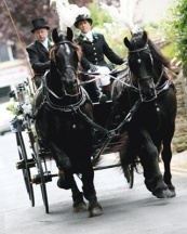 black horse carriage